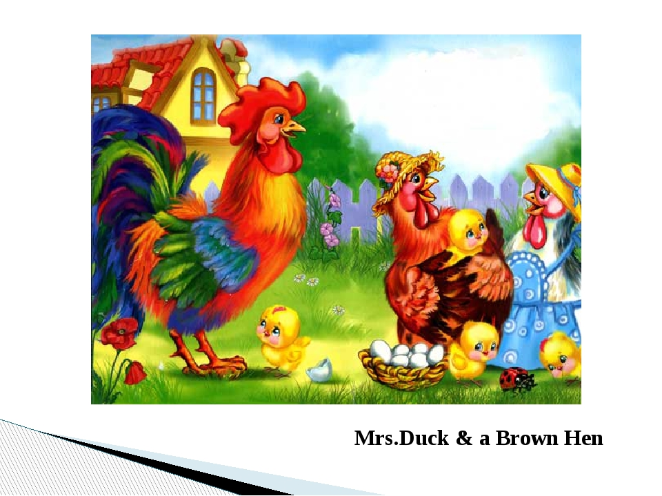 Mrs.Duck & a Brown Hen
