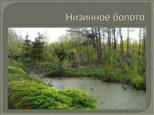 Низинное болото