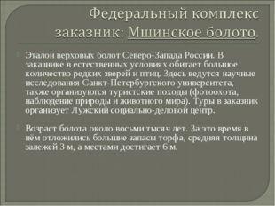 Эталон верховых болот Северо-Запада России. В заказнике в естественных услови