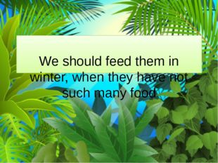 We should feed them in winter, when they have not such many food