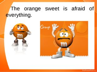 The orange sweet is afraid of everything.