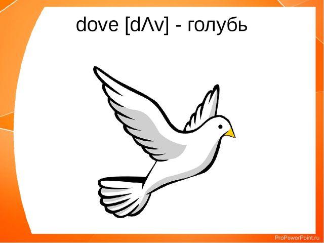 dove [dΛv] - голубь