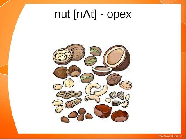 nut [nΛt] - орех