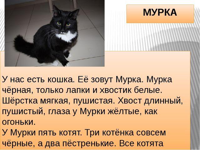 МУРКА У нас есть кошка. Её зовут Мурка. Мурка чёрная, только лапки и хвостик...