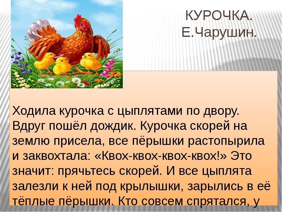 КУРОЧКА. Е.Чарушин. Ходила курочка с цыплятами по двору. Вдруг пошёл дождик....