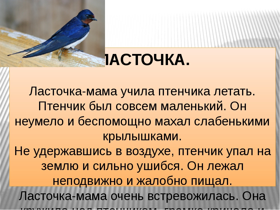 ЛАСТОЧКА. Ласточка-мама учила птенчика летать. Птенчик был совсем маленький....