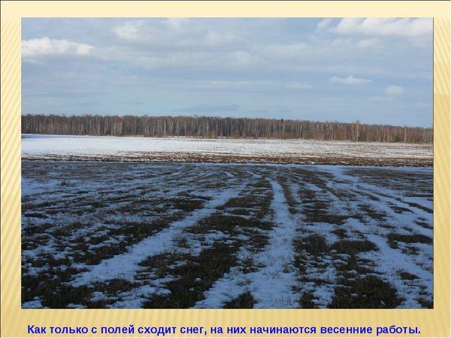 Как только с полей сходит снег, на них начинаются весенние работы.