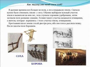 Как тысячу лет назад сеяли хлеб? В далекие времена все больше не поля, а леса