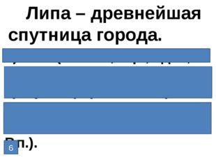 1)липа (1-е скл, ж.р., ед.ч., И.п.); 2)спутница (1-е скл, ж.р., ед.ч., И.п.);
