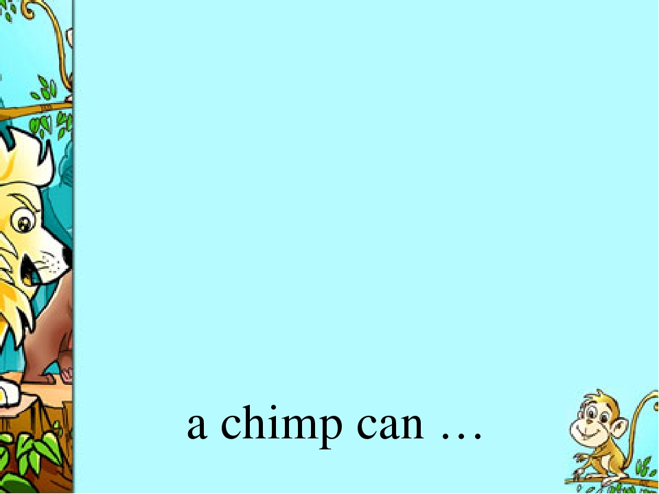 a chimp can …
