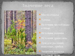 Значение леса Место отдыха Аптека Источник чистой воды и пищи Источник топлив