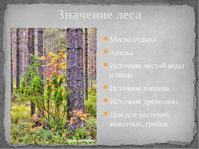 Значение леса Место отдыха Аптека Источник чистой воды и пищи Источник топлив...