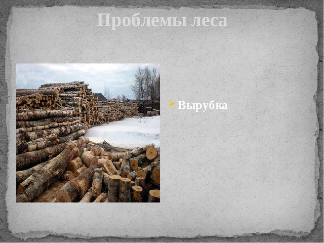 Проблемы леса Вырубка