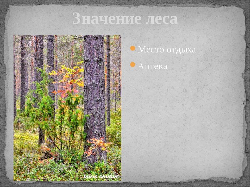 Значение леса Место отдыха Аптека