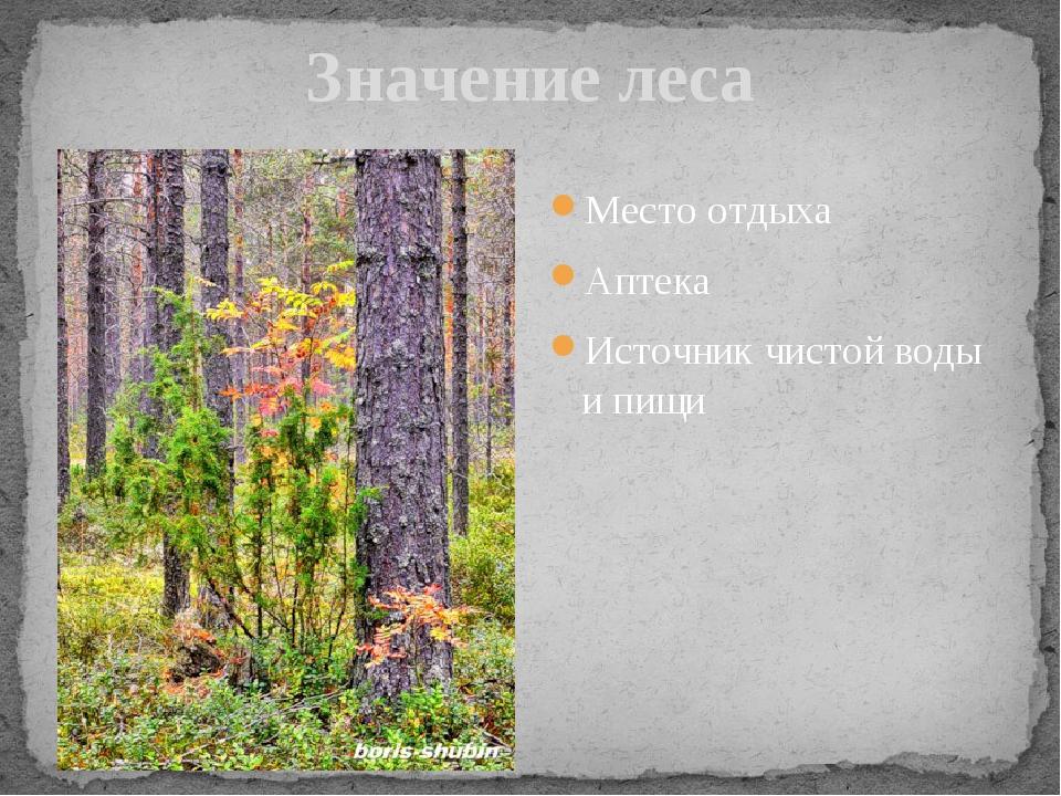 Значение леса Место отдыха Аптека Источник чистой воды и пищи