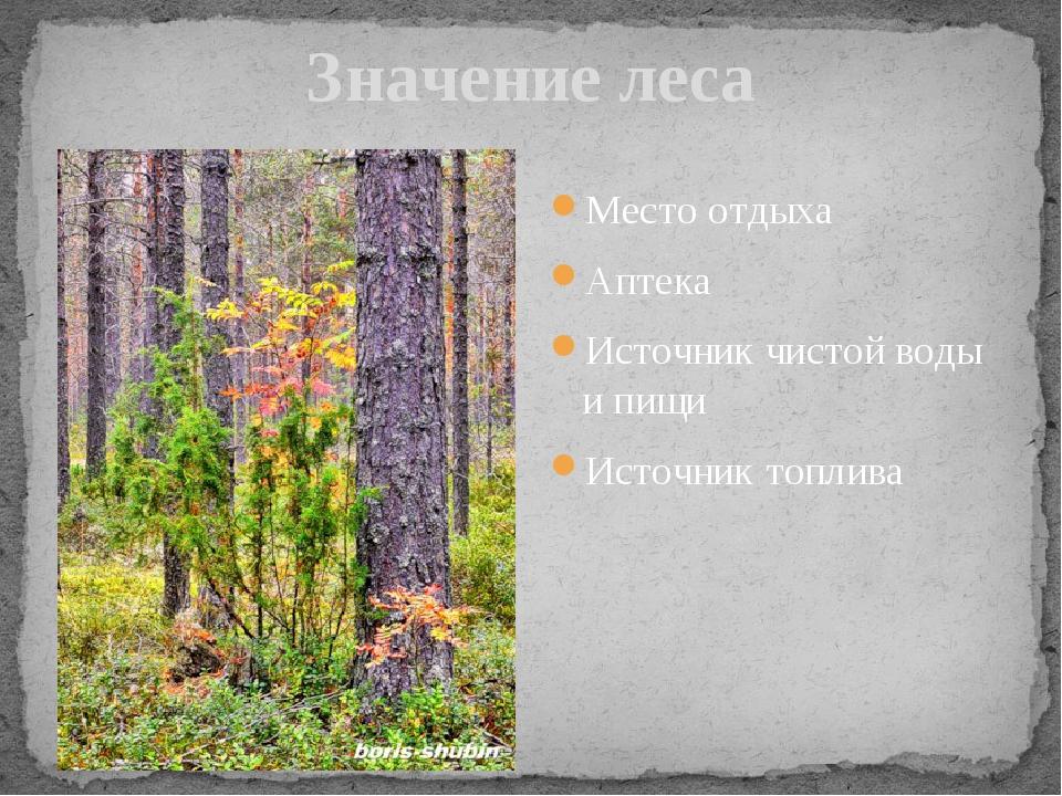 Значение леса Место отдыха Аптека Источник чистой воды и пищи Источник топлива