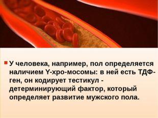 У человека, например, пол определяется наличием Y-xpo-мосомы: в ней есть ТДФ
