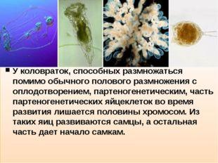 У коловраток, способных размножаться помимо обычного полового размножения с
