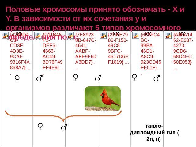 Половые хромосомы принято обозначать - Х и Y. В зависимости от их сочетания у...