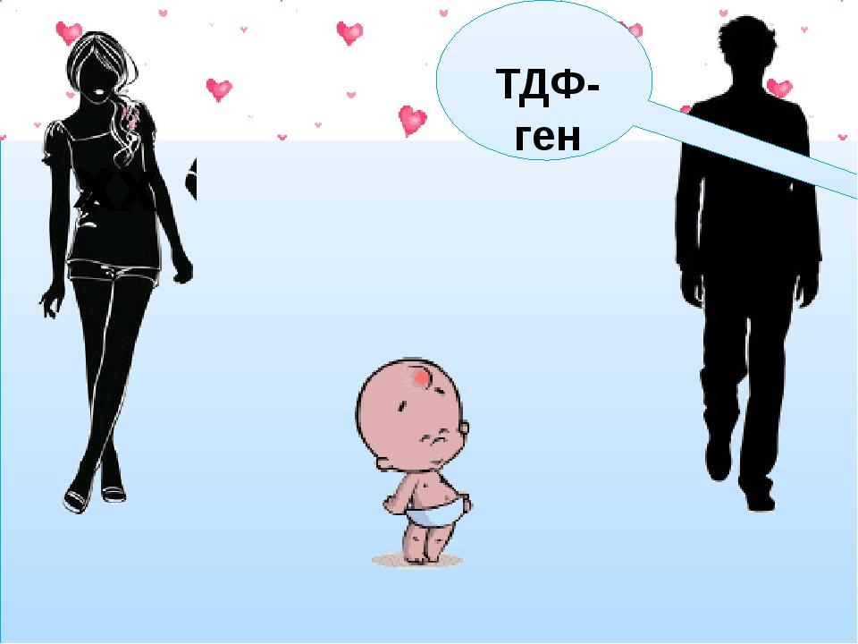 У Х Х У Х Х Х Х ТДФ-ген
