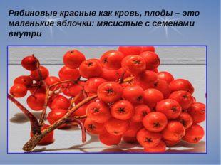Рябиновые красные как кровь, плоды – это маленькие яблочки: мясистые с семен