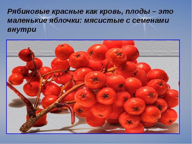 Рябиновые красные как кровь, плоды – это маленькие яблочки: мясистые с семен...