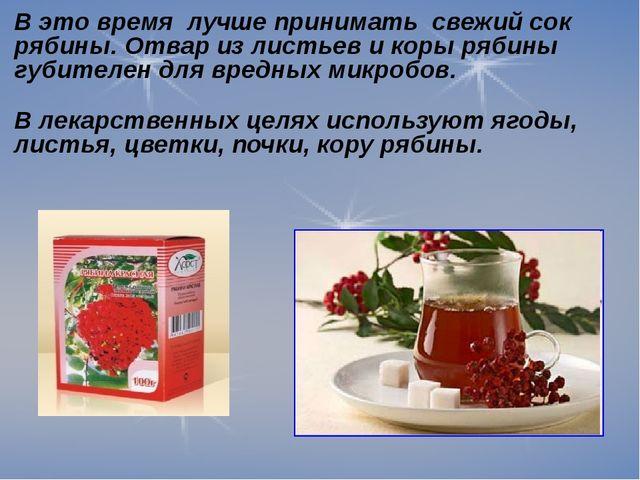 В это время лучше принимать свежий сок рябины. Отвар из листьев и коры рябины...
