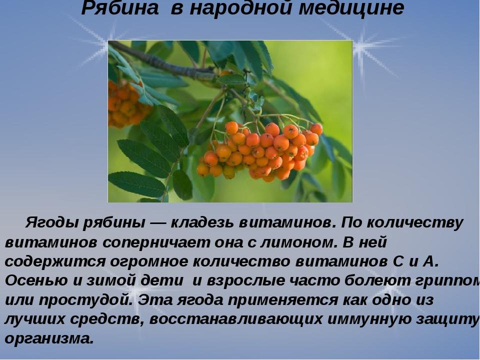 Рябина в народной медицине Ягоды рябины — кладезь витаминов. По количеству ви...
