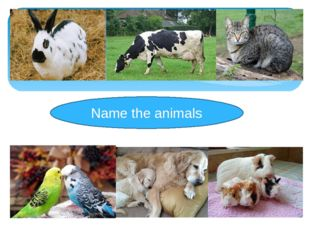 Name the animals