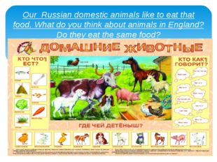 Our Russian domestic animals like to eat that food. What do you think about a