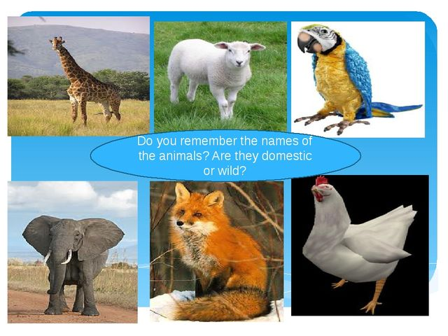 Do you remember the names of the animals? Are they domestic or wild?