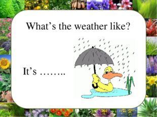 What's the weather like? 	It's ……..