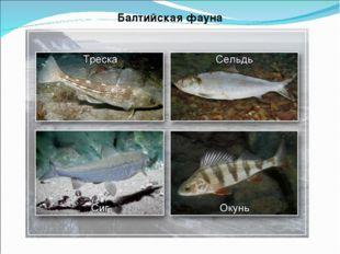 Балтийская фауна