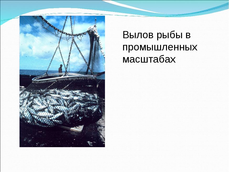 Вылов рыбы в промышленных масштабах