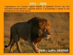 ЛЕВ – ЦАРЬ ЗВЕРЕЙ Традиционно его считают царем зверей. В Древнем Египте лев