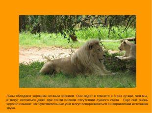 Львы обладают хорошим ночным зрением. Они видят в темноте в 8 раз лучше, чем