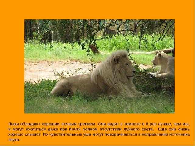 Львы обладают хорошим ночным зрением. Они видят в темноте в 8 раз лучше, чем...