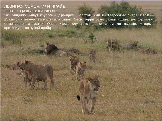 ЛЬВИНАЯ СЕМЬЯ, ИЛИ ПРАЙД Львы – социальные животные. Эти хищники живут группа...