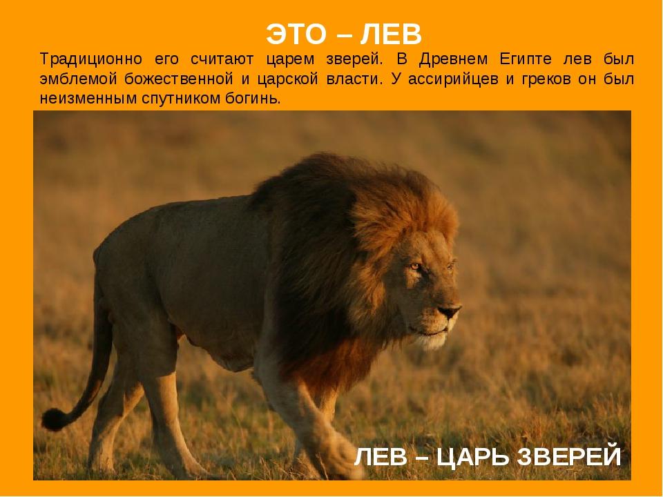 ЛЕВ – ЦАРЬ ЗВЕРЕЙ Традиционно его считают царем зверей. В Древнем Египте лев...