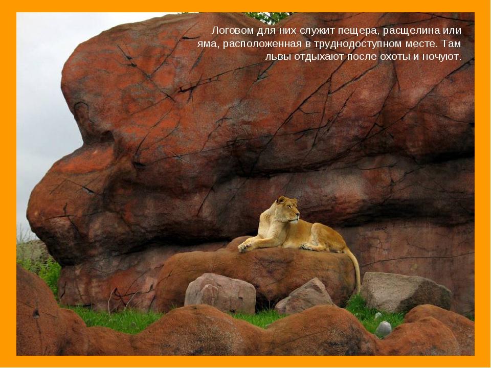 Логовом для них служит пещера, расщелина или яма, расположенная втруднодосту...