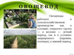 О В О Щ Е В О Д Овощеводы работают в сельскохозяйственном производстве как
