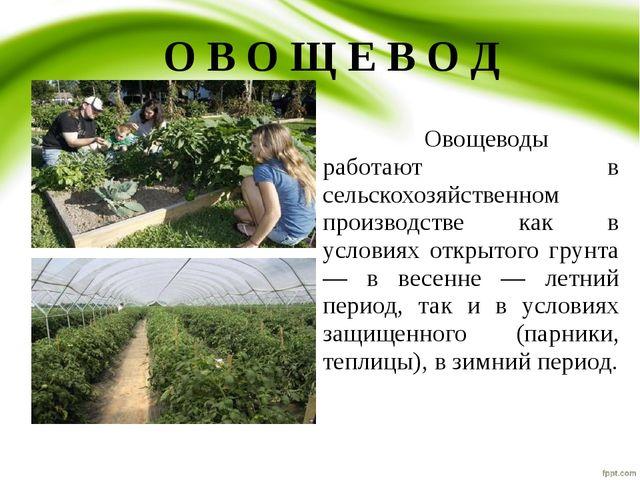 О В О Щ Е В О Д Овощеводы работают в сельскохозяйственном производстве как...