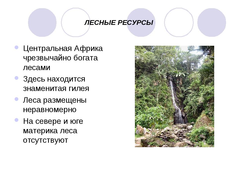 ЛЕСНЫЕ РЕСУРСЫ Центральная Африка чрезвычайно богата лесами Здесь находится з...