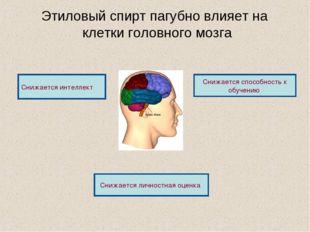 Этиловый спирт пагубно влияет на клетки головного мозга Снижается способность