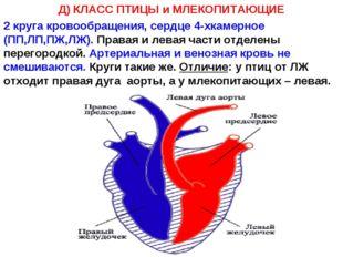 Д) КЛАСС ПТИЦЫ и МЛЕКОПИТАЮЩИЕ 2 круга кровообращения, сердце 4-хкамерное (ПП