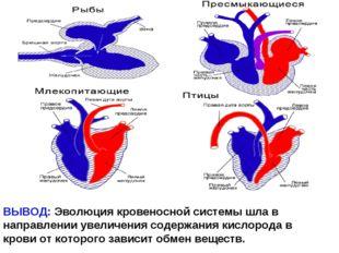 ВЫВОД: Эволюция кровеносной системы шла в направлении увеличения содержания к