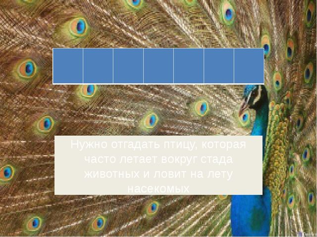Нужно отгадать птицу, которая часто летает вокруг стада животных и ловит на л...