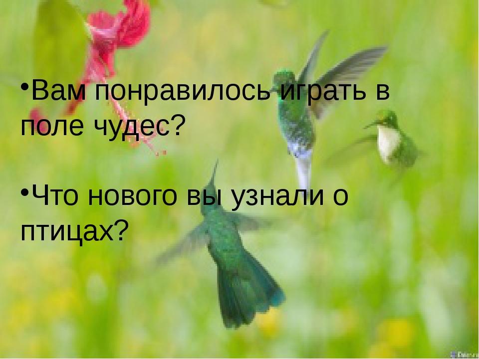 Вам понравилось играть в поле чудес? Что нового вы узнали о птицах?