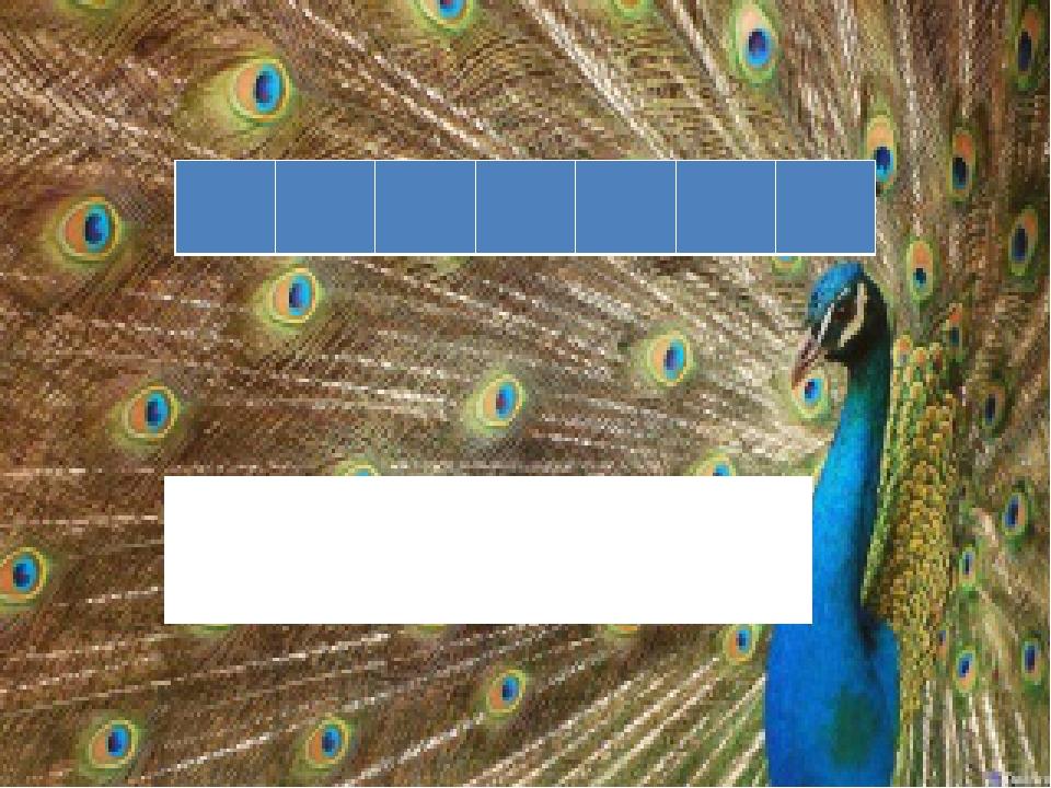 На табло зашифровано название лесной птицы, не высиживающая своих птенцов