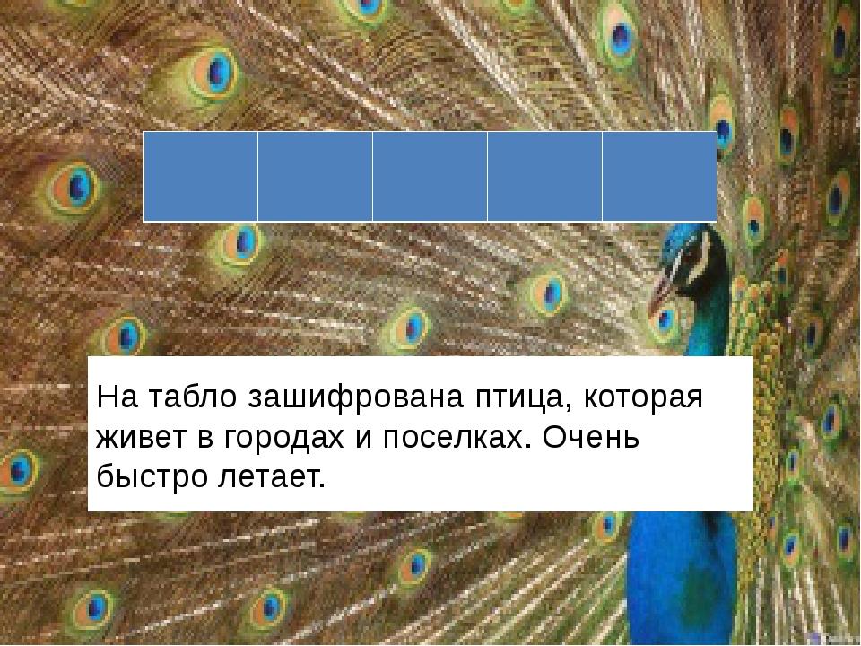 На табло зашифрована птица, которая живет в городах и поселках. Очень быстро...